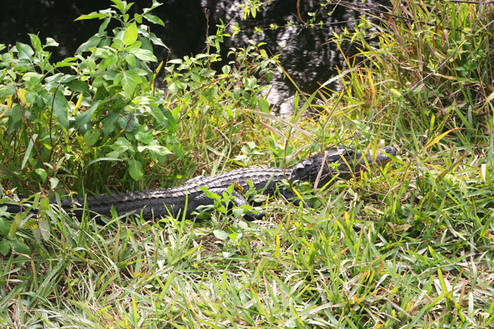 Private-Everglades-Tour-11