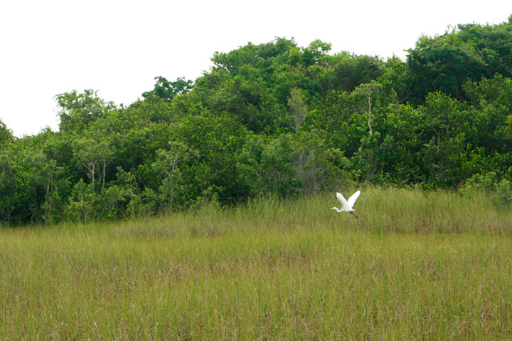 Private-Everglades-Tour-13
