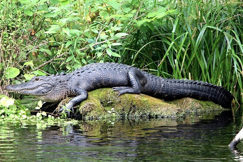 tours of everglades