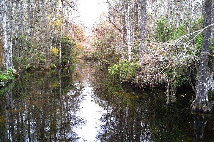 Private-Everglades-Tour-10