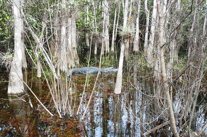 Private-Everglades-Tour-12